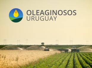 Oleaginosos Uruguay / GRMN Studio